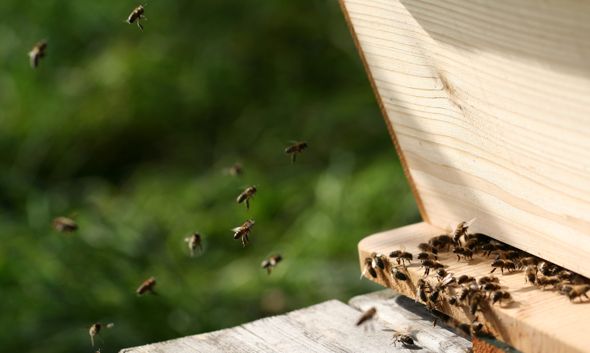 Natuurlijk Bijenhouden